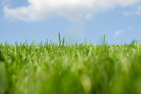 Grass sky clouds nature fascinates beauty green