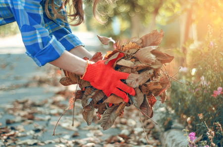 Woman gardener cleans leaves in the garden sun nature autumn sun nature