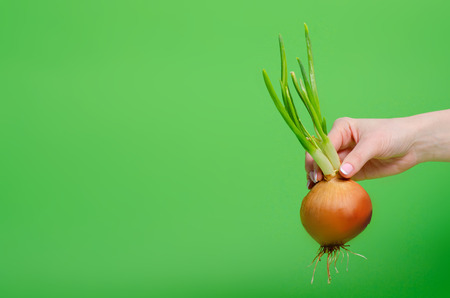 Onion grows green in hand on green background Stock Photo - 117888589