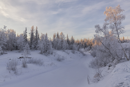 rime: winter forest. beautiful winter landscape.