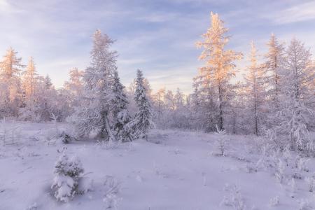 white winter: winter forest. beautiful winter landscape.