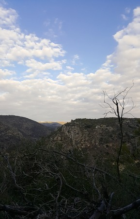 Dry twigs and trees, Carmel Mountains as a background, sky, Israel