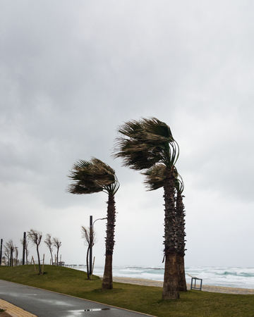 Strong wind blows from the sea and bends palms on the coast Stock Photo