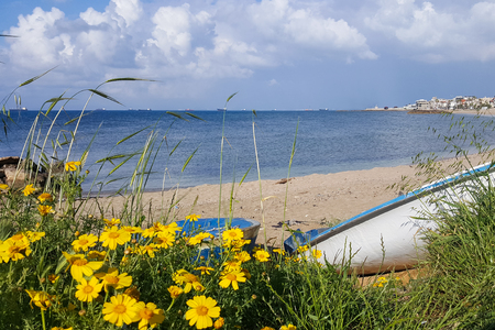 Yellow flowers in green grass against the blue sky and the Mediterranean Sea, boat on the beach of Bat Galim, Israel
