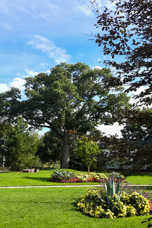 greengrass: Green trees in High Park and flowerbed, blue sky. Toronto, Canada