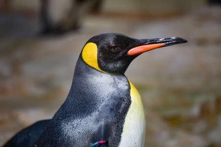potrait: Potrait of a penguin