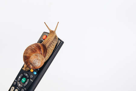 A snail crawls on the remote from the TV, isolated on a white background. The concept of TV broadcasting.