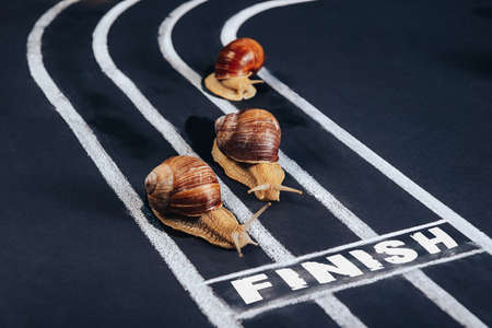 Three snails crawl along the treadmill to the finish line. 版權商用圖片