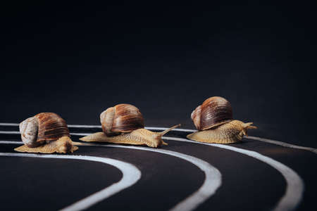Three snails crawl along the treadmill to the finish line. Selective focus. The concept of development, competition, victory, success.