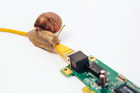 A snail crawls along an Internet wire connected to a network card.