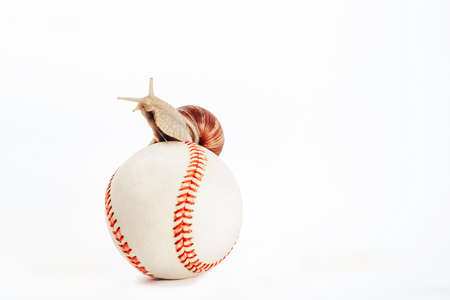 A horned snail sits on a baseball isolated on a white 版權商用圖片