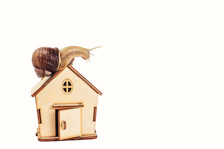 A horned snail sits on the roof of a house.