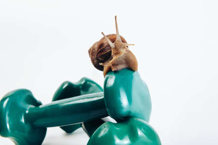 A horned snail sits on fitness dumbbells.