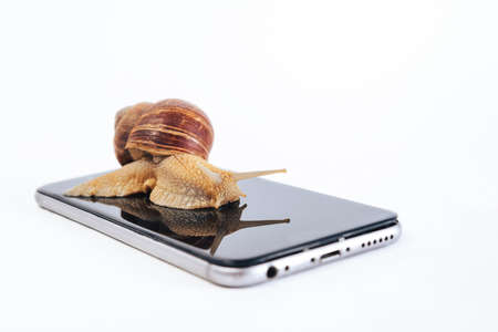 A horned snail looks at its reflection sitting on the screen of a smartphone. Slow data transfer, communication.