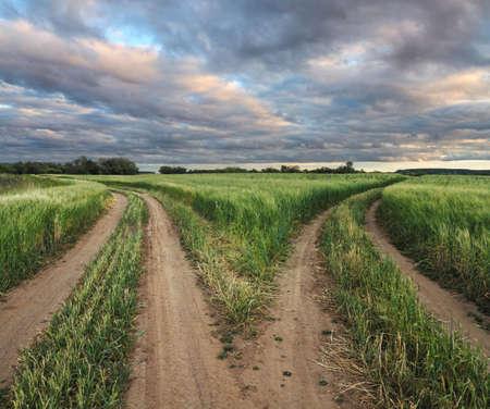 fork in a rural road in field
