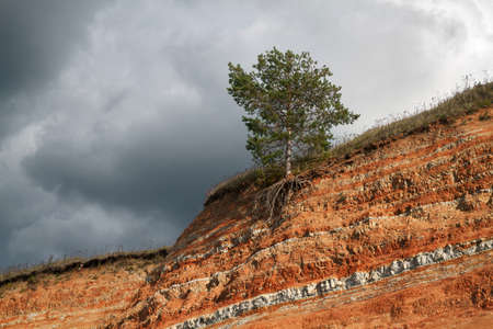 A tree growing on the edge of the cliff