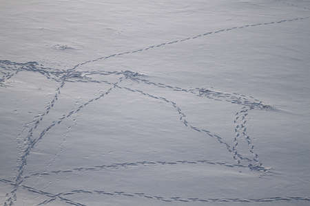 chains of human and animal footprints in the snow, top view Standard-Bild - 97297720