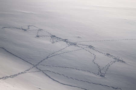 chains of human and animal footprints in the snow, top view Standard-Bild - 97614602