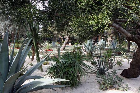 bahai: Bahai Cactus gardens  Stock Photo