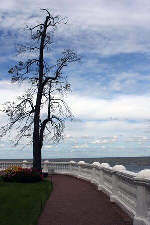 clowds: Baltic sea view with a tree Stock Photo