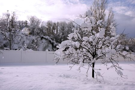 A tree in a winter snow with blue sky Stock Photo - 6702875