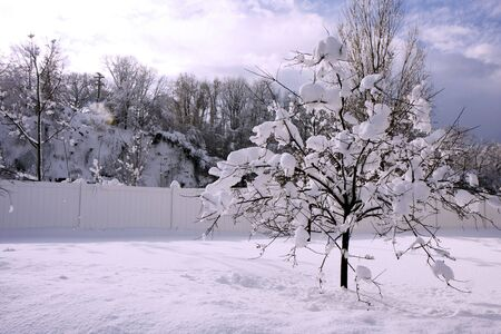 A tree in a winter snow with blue sky Stock Photo - 6702873