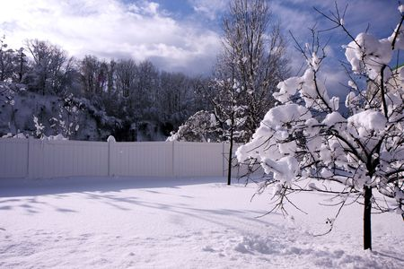 A tree in a winter snow with blue sky Stock Photo - 6702874