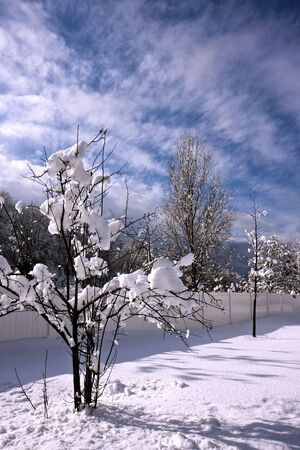 A tree in a winter snow with blue sky Stock Photo - 6702876