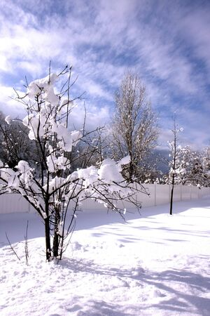 A tree in a winter snow with blue sky Stock Photo - 6702872