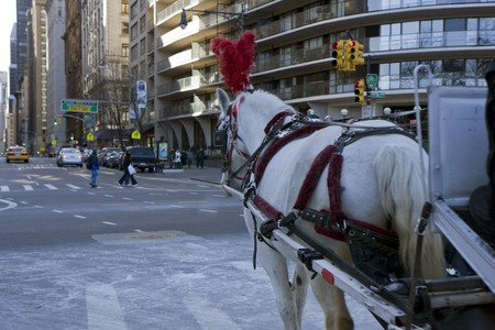 Horse with carriage next to the Central park in New York  photo