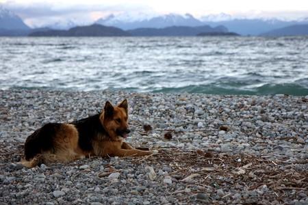 bariloche: Dog at Nahuel Huapi lake at  sunset in Bariloche, Argentina