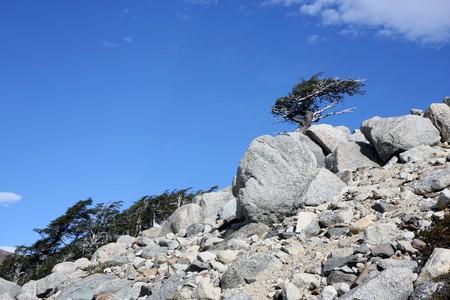 pain�: Natura Torres del Paine