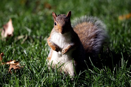 squirrel standing on the back legs in a park