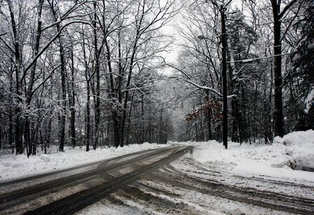 road in a snowy forest photo