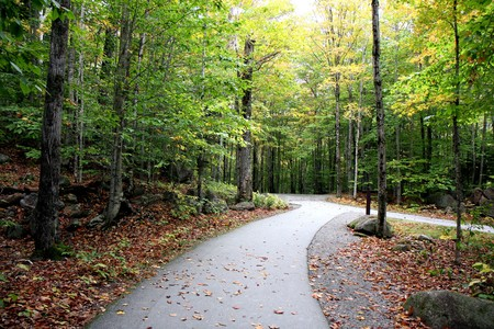 A road in forest and the trees at fall time