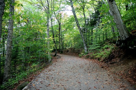 A path in a forest and the trees at fall time photo