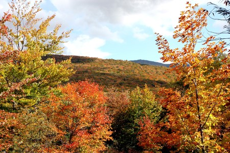 worl: A mountain and the trees under at fall time