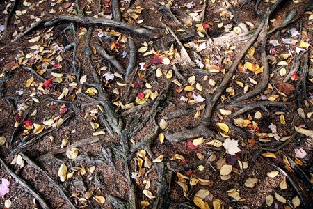 worl: Roots of trees in a forest at fall time Stock Photo