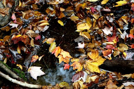 worl: Leaves of trees in a forest at fall time in water on the ground Stock Photo