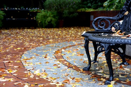 leaves at the ground at fall time at Washington DC