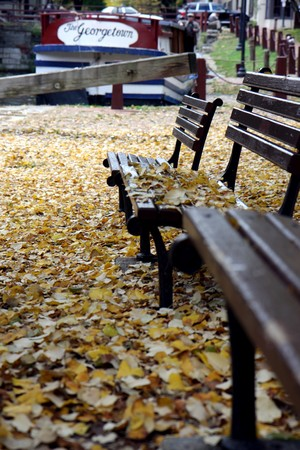 leaves at the ground and a above benches at fall time at Washington DC Stock Photo - 7964815