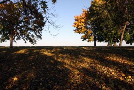 Autumn yellow trees next to a lake photo