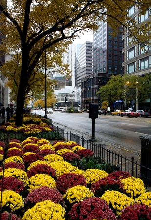 Street in Chicago city at autumn