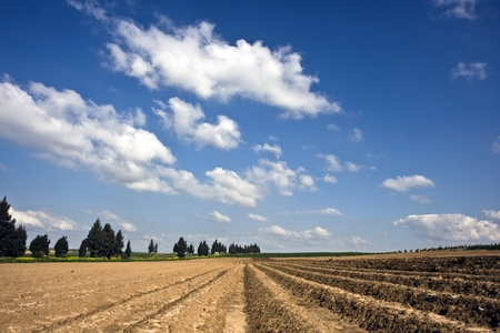 israel farming: Landscape with agricultural field in Israel in winter