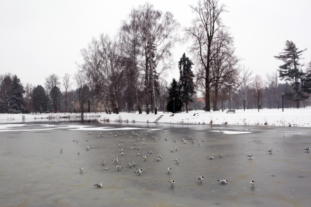 budweis: Frozen river in the old city of Ceske Budejovice