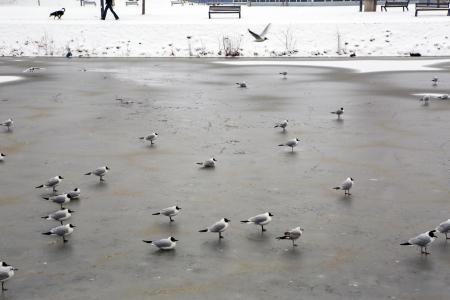 budejovice: Frozen river in the old city of Ceske Budejovice