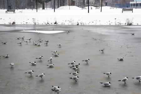 ceske: Frozen river in the old city of Ceske Budejovice