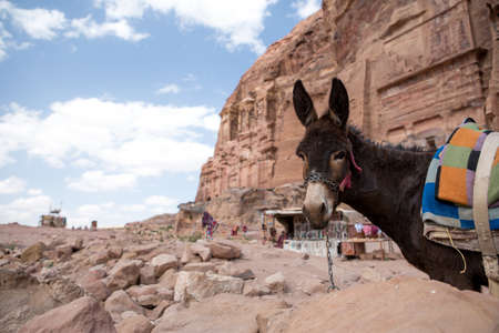 nabataean: A donkey in the old Nabataean city Petra, Jordan