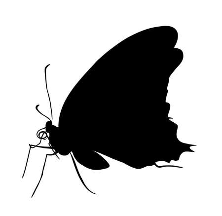 subsist: Black butterfly silhouette vector illustration