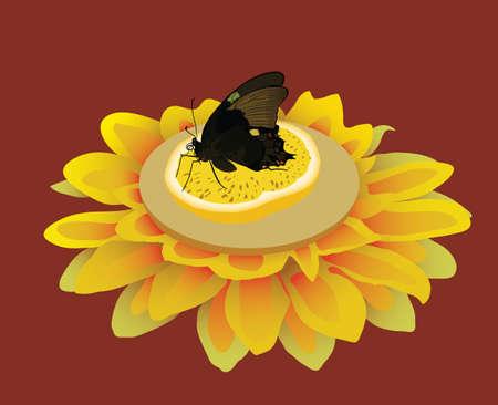 Black butterfly on the orange slice with flower illustration.
